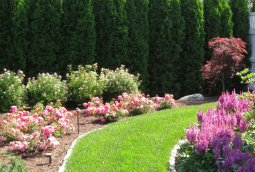 Tips to Maintain Healthy Lawn in Summer in Boxford MA